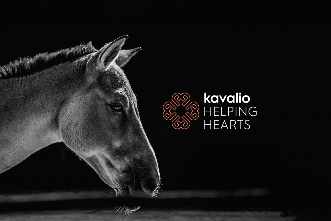 2019-02-11-kavalio-stories-helpinghearts